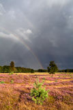 Rainbow after shower over meadow with heather Royalty Free Stock Photos