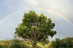 Rainbow sky. Rainbow in sky over tree after rain Stock Images