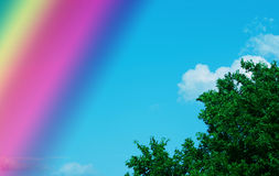 Rainbow sky. A rainbow crosses a bright blue sky with a few clouds and the top of a tree with vivid green leaves Stock Photo