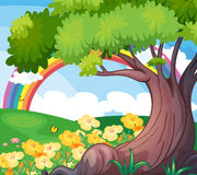 A rainbow in the sky and the beautiful flowers Stock Photo
