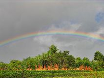 Rainbow, sky, meteorological phenomenon, phenomenon, tree, field, landscape. Rainbow is sky, tree and grass. That marvel has meteorological phenomenon, field and Royalty Free Stock Images