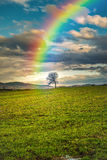 Rainbow in the sky pointing a lonely tree Stock Image