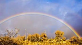 Rainbow sopra gli alberi Fotografia Stock Libera da Diritti