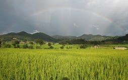 Rainbow sopra il giacimento del riso Fotografia Stock Libera da Diritti