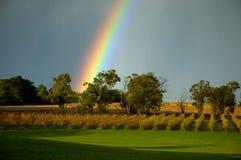 Rainbow sopra le viti Immagine Stock Libera da Diritti