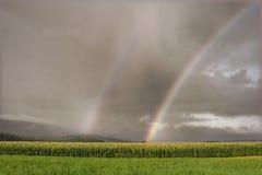 Rainbow sopra un campo di cereale Fotografia Stock Libera da Diritti