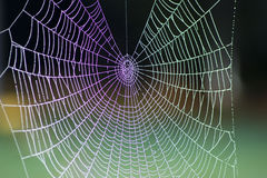 Rainbow spiders web Royalty Free Stock Images