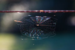 Rainbow on a spiderweb Stock Images