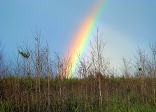 Rainbow spring. The first May rainbow fell over the wood Royalty Free Stock Photos