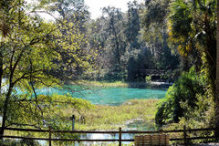 Rainbow Springs in Dunnellon, Florida royalty free stock photography