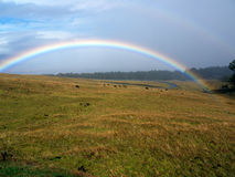 Rainbow and stormy clouds. Beautiful rainbow and stormy clouds above. Dry grass field and cows grazing. On the way to Haleakala mountain Maui Hawaii Royalty Free Stock Photography