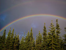 Rainbow Stretches Over the Tops of Trees Stock Photo
