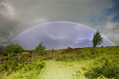 Rainbow in stromy sky above landscape of foxgloves Stock Images