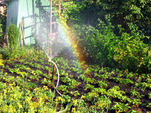 Rainbow in the sunny den, in the garden. Rainbow on a sunny day of irrigation bryzgalki, in the garden Stock Photos