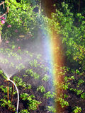 Rainbow in the sunny den, in the garden. Rainbow on a sunny day of irrigation bryzgalki, in the garden Stock Images