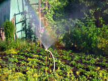Rainbow in the sunny den, in the garden. Rainbow on a sunny day of irrigation bryzgalki, in the garden Stock Image
