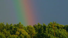 Rainbow in the sunny sky over the woods stock video footage