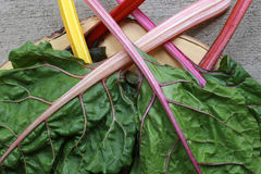 Rainbow Swiss Chard. Colorful rainbow Swiss chard from farmer& x27;s market Royalty Free Stock Images