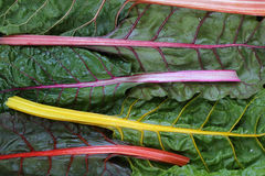 Rainbow Swiss Chard Stock Photo