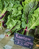 Rainbow Swiss Chard Royalty Free Stock Images
