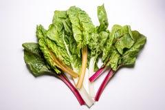 Rainbow swiss chard, mangold beetroot leaves. Vegetarian organic healthy food stock image