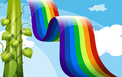 A rainbow and a tall vineplant Royalty Free Stock Image