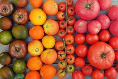 Rainbow from tomato. Stock Photography