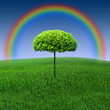 Rainbow tree. On a green field Royalty Free Stock Image
