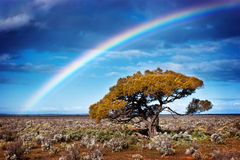 Rainbow Tree. Rainbow over a lone tree in the desert Stock Images