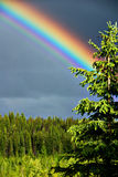 Rainbow and tree. Big rainbow above a tree Royalty Free Stock Photos
