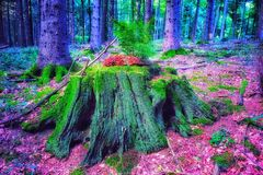 Rainbow Tree in forest background. Rainbow Tree in forest Royalty Free Stock Photography
