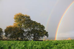 Rainbow, Trees and Field Royalty Free Stock Images
