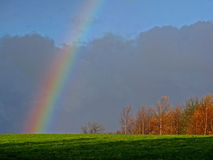Rainbow on trees. A rainbow lights up nearby trees on a hill top at dawn Stock Photography