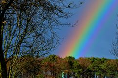 Rainbow among the trees. Luminous band with an arc shape that presents the colors of the solar spectrum and sometimes appears in the sky, due to the refraction Stock Photos