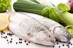 Rainbow Trout. Raw Rainbow Trout with fresh vagatable royalty free stock photography
