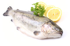 Rainbow trout. Close-ups of raw rainbow trout isolated on white ready to cook stock images