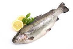 Rainbow trout stock photos