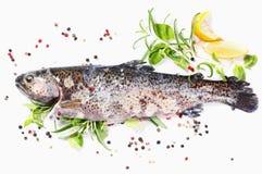 Rainbow trout Stock Image