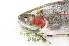 Rainbow Trout. Fresh rainbow trout with thyme and rosemary, ready for cooking Stock Images