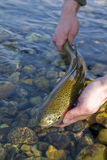 Rainbow trout. Rainbown trout caught on a channel durin the spring trip royalty free stock photos