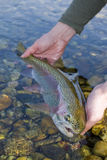 Rainbow trout. Rainbown trout caught on a channel durin the spring trip royalty free stock image