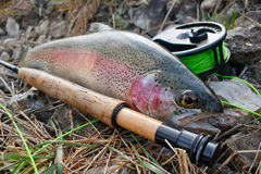 Rainbow trout accident. Accident while fishing for trout stock photos