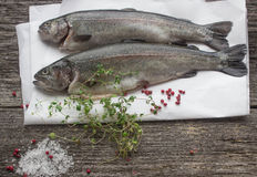 Rainbow trout for baking Stock Photography