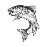 Rainbow trout black and white sketch Stock Image