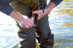 Rainbow Trout Catch Release Royalty Free Stock Photography