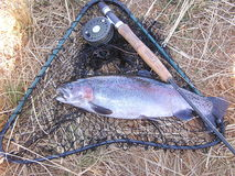 Rainbow trout  fish. Rainbow trout shown with rod,reel and net Royalty Free Stock Photos