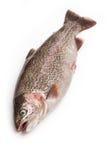 Rainbow trout fish Stock Photo