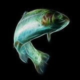Rainbow Trout Fish Fractal. Adult Trout Fish Isolated On Black stock photo