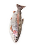 Rainbow trout fish Stock Image