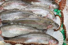 Rainbow trout fish. Rainbow trout - seafood shopping at a market place in Leeds, UK Royalty Free Stock Image